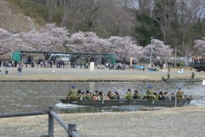 船岡駐屯地の桜