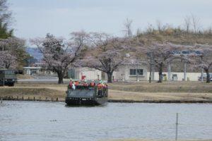 94式水際地雷敷設車と桜