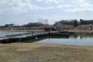 訓練池にかかる92式浮橋